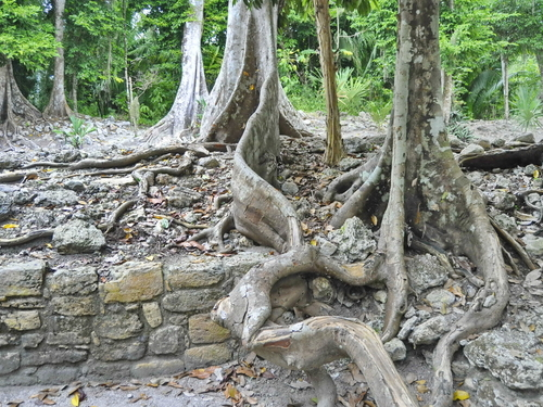 Mahahual Mayan Ruins Shore Excursion Reservations
