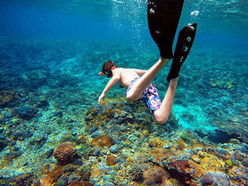 Roatan  Honduras coral reef Excursion Prices