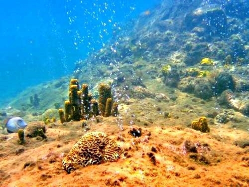 Dominica snorkel Excursion Reservations