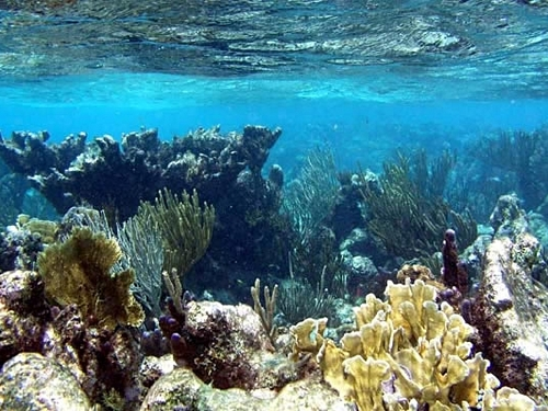 Grand Cayman Barrier Reef Cruise Excursion Reservations