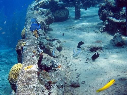 Curacao guided snorkeling Excursion Reservations