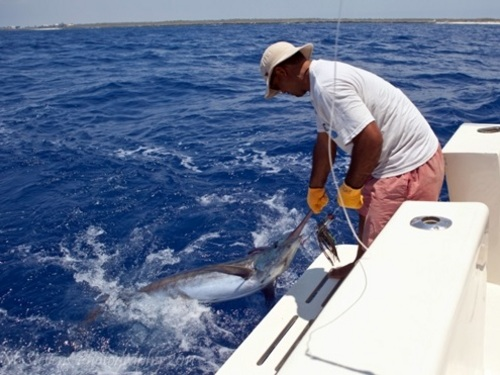 Grand Cayman whole day charter Tour