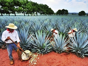 Mazatlan All About Tequila Excursion at La Noria