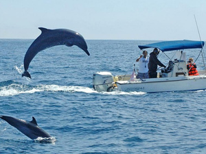 Mazatlan Swim with Wild Dolphins Excursion