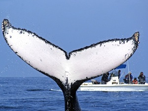 Mazatlan Whale Watching Research Excursion