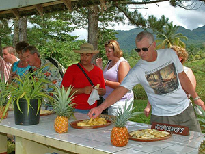Montego Bay Croydon Pineapple and Coffee Plantation Excursion