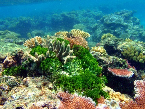 Dominica Snorkel Excursion Reviews