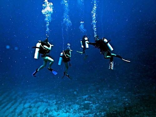 Roatan Scuba Diving Cruise Excursion Booking