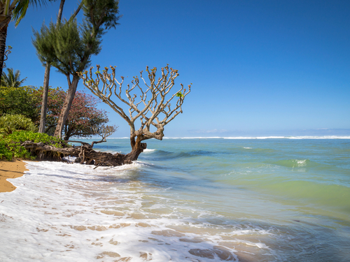 Nawiliwili Kauai Anini Beach Shore Excursion Reviews