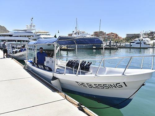 Cabo San Lucas Mexico Sea of Cortez wildlife Cruise Excursion Cost