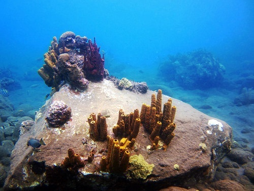 Dominica padi Excursion Reviews