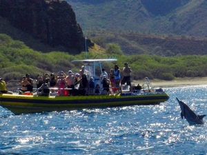 Oahu Honolulu Snorkel Cruise with Dolphins Excursion