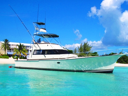 Cayman Island stingray city and reef snorkel Trip Reviews