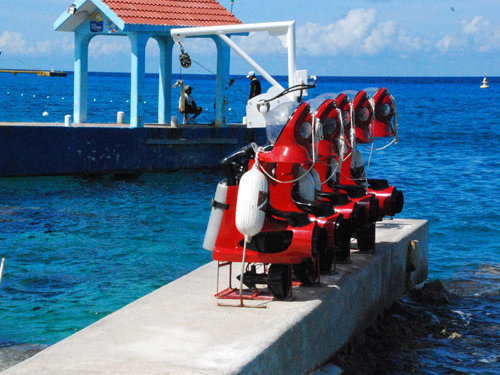 Cozumel marine life  Excursion
