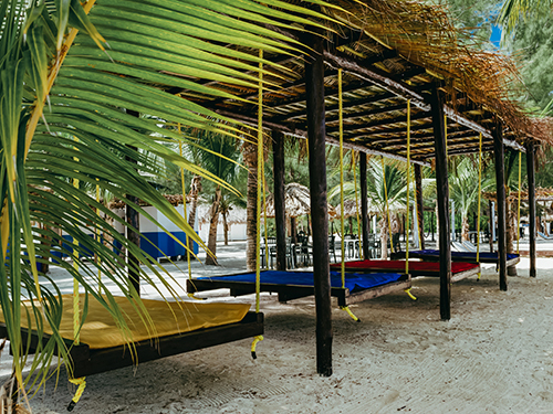 Cozumel  Mexico follow jungle trails Prices