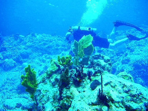Dominica diving Cruise Excursion Reviews