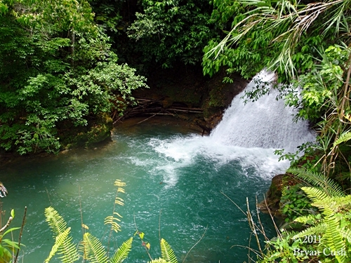 Falmouth  Jamaica waterfall climb Prices