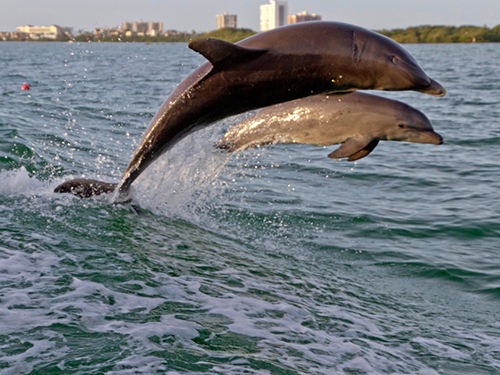 Canaveral Orlando Wild Dolphin
