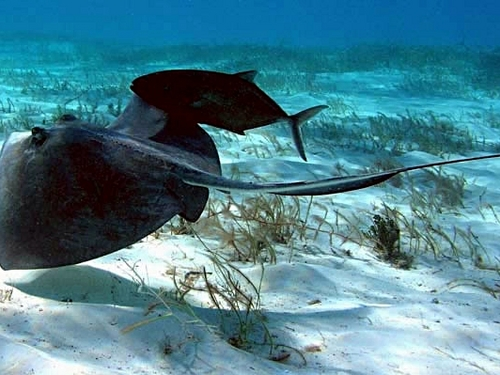 Grand Cayman   Stingray City  Excursion Reservations