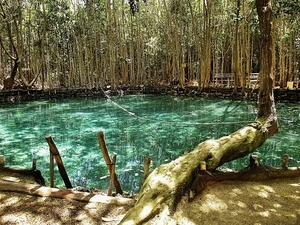 Progreso Cenote Natural Reserve with Beach Break Excursion