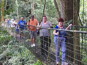 Puerto Caldera Rainforest Treetop Skywalk Half Day Excursion