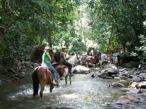 Puntarenas Beach and Rainforest Horseback Riding with Crocodile Safari Boat Excursion