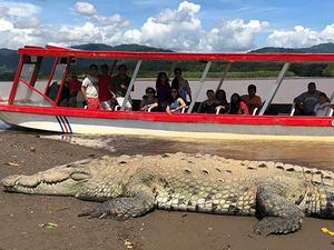 Puntarenas Crocodile Encounter and Half Day Tarcoles River Cruise Excursion