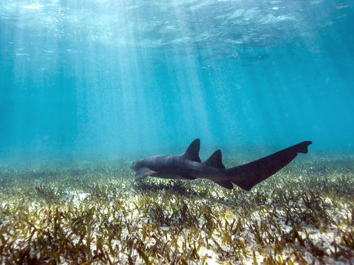 Belize Shark Ray Alley Excursion Cost