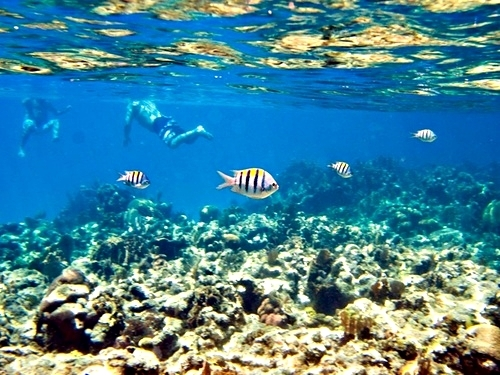 Roatan snorkel and beach Shore Excursion Cost
