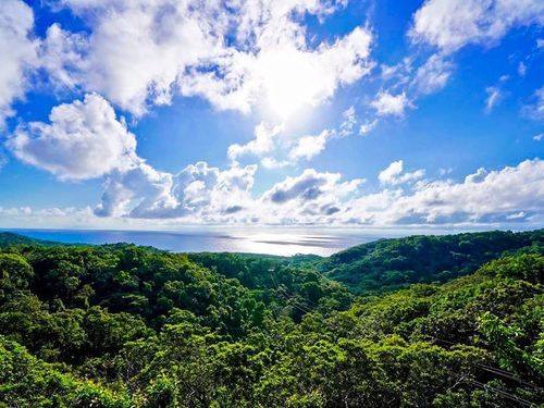 Roatan Canopy Zip Line Shore Excursion Reviews
