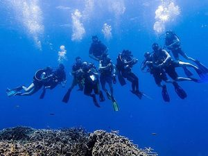Roatan Certified 2-Tank SCUBA Dive at Mary's Place and Shipwreck Excursion