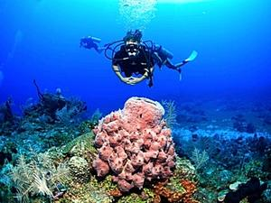 Roatan Certified 2 Tank SCUBA Diving Excursion