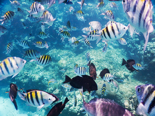 Roatan Honduras Marine Life Cruise Excursion Reservations
