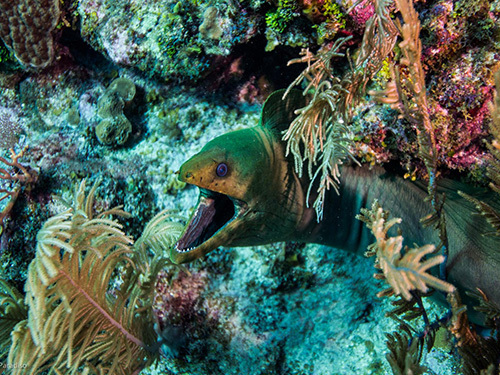 Roatan learn to dive Shore Excursion Booking