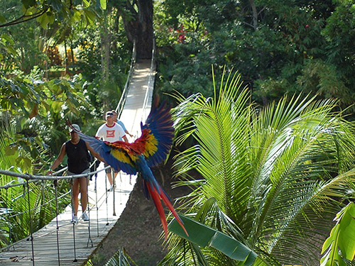 Roatan Honduras Monkeys and Parrots Shore Excursion Prices