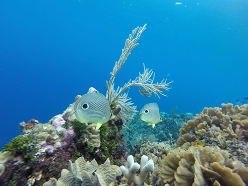 Roatan  Honduras Coral Reef Shore Excursion Reviews