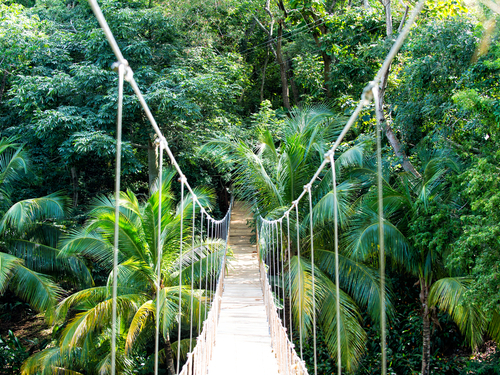 Roatan Honduras jungle walkways Excursion Prices