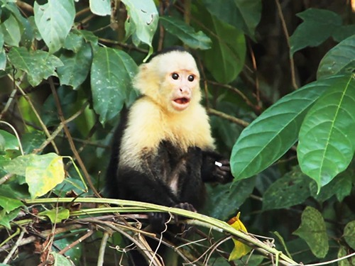 Roatan Honduras Monkey and Sloth Sightseeing Excursion Cost