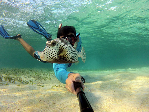 Roatan  Honduras Reef wall Excursion Cost