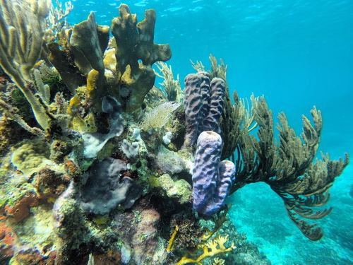 Roatan  Honduras Reefs Excursion Booking