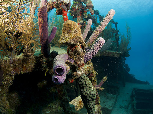 Roatan  Honduras Shipwreck Cruise Excursion Reviews