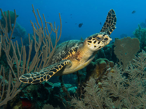 Roatan Marine Life Excursion Cost