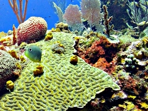 Roatan Reef Snorkeling and Pristine Resort Beach Break Excursion