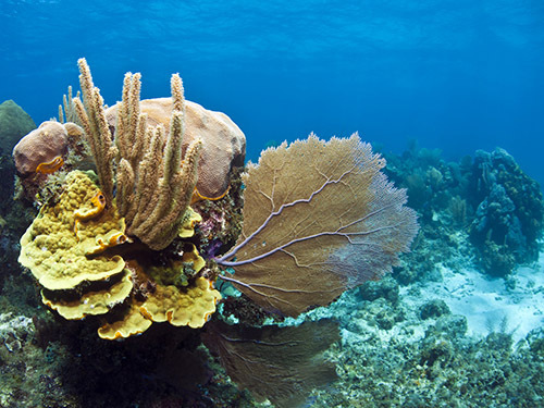 Roatan Reef wall Cruise Excursion Prices