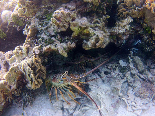 Roatan Reefs Excursion Booking
