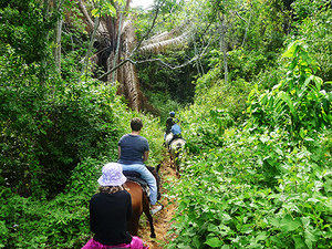 Roatan Sightseeing, Shopping and Jungle Horseback Riding Excursion