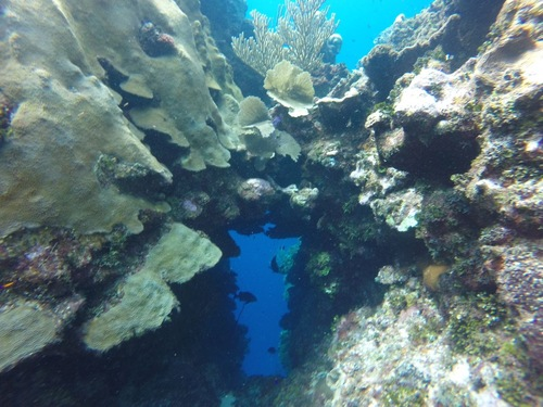 Roatan Snorkel Shore Excursion Cost