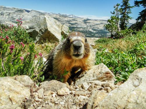 San Francisco Full Day Yosemite National Park Excursion
