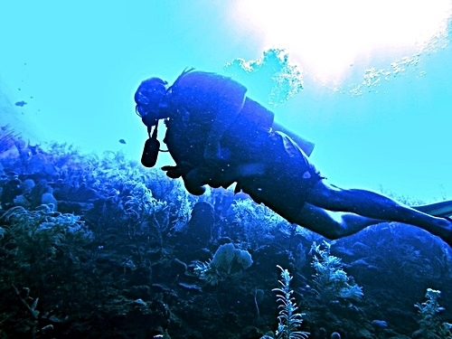 Roatan 2 tank dive Shore Excursion Booking