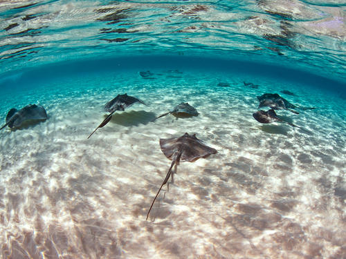 Grand Cayman  Cayman Islands stingray city Tour Cost